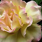 Glorious Yellow Rose by Lorrie Morrison