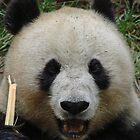 Panda by Garret