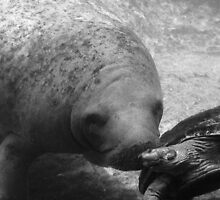 Manatee Kiss  318 Views by Rosalie Scanlon