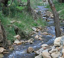 Bubbling creek at Morialta. by elphonline