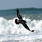 Spread your wings; So. Morro Bay, California, USA  by leih2008