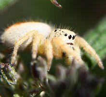 Spider HeadLights by SB  Sullivan