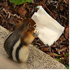 Chipmunk Eating Napkin by Vickie Emms