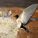 Barn Swallows by David Lee Thompson