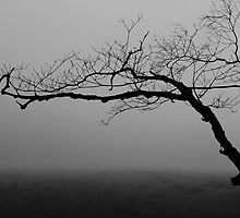 reaching for the fog by dc witmer