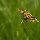 Patterned Wings by JLOPhotography