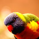 Rainbow lorikeet by HowieP