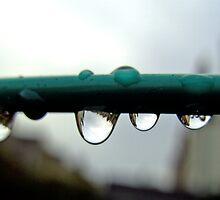 Raindrops in the Garden. BRISTOL, ENGLAND by kojobar