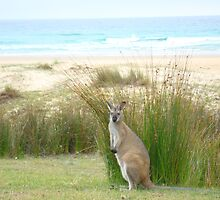 Australian wildlife by Of Land & Ocean - Samantha Goode
