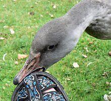 AARDVARK's Sandals Are So Yummy! by AARDVARK