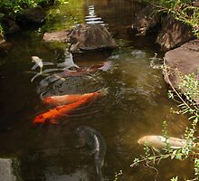 Koi Carp River by Harlequitmix