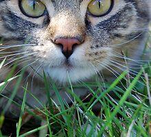 Hunting Cat by Evan Sharboneau