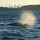 Humpback Whale - with Sydney skyline in the background by Samantha  Goode