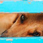 sleepy stray dog by Hannele Luhtasela-el Showk
