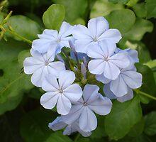 Floridian Flower - Blue by CBenson