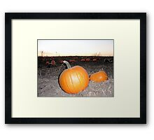 Pumpkin Patch Field at Dusk - Nature Photography by Barberelli Framed Print