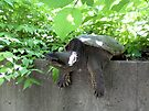 Just hanging around! - Turtle! by Barberelli