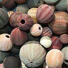 Sea Urchins  by tracyleephoto
