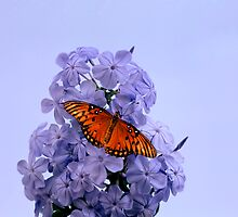Plumbago and Gulf Fritillary by Roger Otto