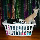 Playful Kittens in a hamper!! by Barberelli