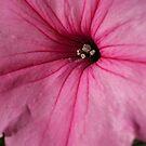 Petunia by lareejc