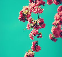 Summer Time by StarlingPhotos