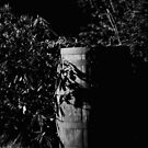 Bush Barrel by 242Digital