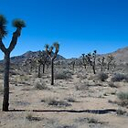 Joshua Tree by magartland