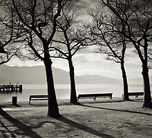 Laketrees in Winter by Delfino