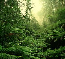 tree fern vista by Donovan wilson