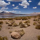 Altiplano Oasis by Krys Bailey