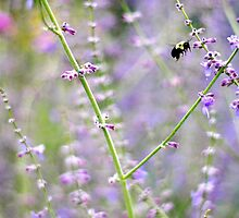 Busy Bee by sara montour