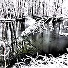The Frozen Pond by ©The Creative  Minds