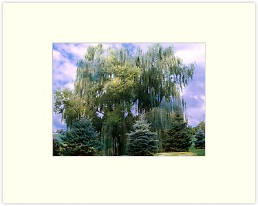 Giant Weeping Willow by Judi Taylor
