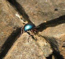 Shiny Beetle by Melissa Park
