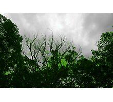Radio active trees Photographic Print
