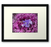 The Kale & The Pansy Framed Print