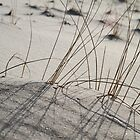 Beach grass - 2012 by Gwenn Seemel