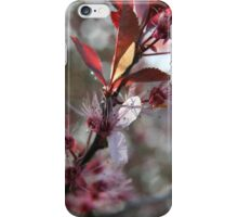 Blossoms on a branch - 2011 iPhone Case/Skin
