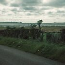 Looking to Holy Isle in centre and Bamburgh to right Northumbria England 198405290003m by Fred Mitchell