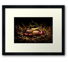 Autumnal still life composition with apples, pear and prunes Framed Print