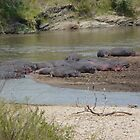 Hippo Pool Party - soooo  laazy ! by Steven Bassion