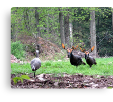 THAT'S BULL Turkeys Canvas Print