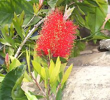 """ Bottle brush. "" by John  Smith"