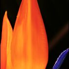 Flame by Mary Ann Reilly