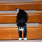 Kitty's first time using the staircase! by Barberelli