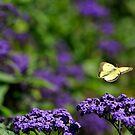 Butterflight by Geoffrey
