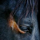 Horses by Sue  Cullumber