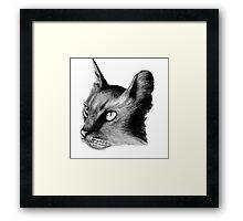 Cat Study Framed Print