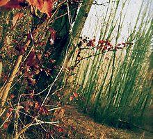 Autumn Walk by featheredge